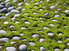 in a Kyoto Moss Garden