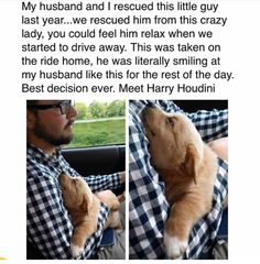 They should call him Harry Houndini Cute Little Animals, Cute Funny Animals, Funny Cute, Funny Animal Memes, Dog Memes, Funny Dogs, Animal Pictures, Cute Pictures, Baby Pictures