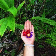 Nature\'s jewels #livelokai