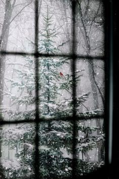 I am sharing some interesting snow images of the winter 2017 with you. and especially the latest 2018 photographs. great photography of winter like fog photography, iceberg photography and snowfall photography (Snow Images). Winter Szenen, I Love Winter, Winter Magic, Winter Season, Winter Christmas, Merry Christmas, Christmas Trees, Natural Christmas, Winter Trees