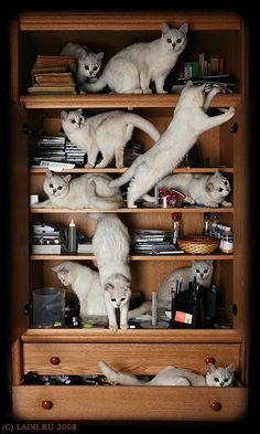 Now if it were only books on the shelves... this would be picture purrrrfect!