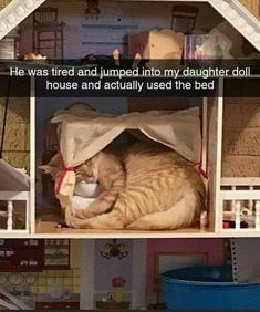 Funny Animal Jokes, Funny Animal Pictures, Cute Funny Animals, Funny Cute, Cute Cats, Cute Cat Memes, Hilarious, Animal Original, Image Chat