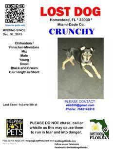 Lost Dog - Chihuahua - Homestead, FL, United States