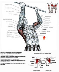 It is often said that the squat is the king of exercises. True. As far as the upper body is concerned, chin-ups are head and shoulders above the rest. Being abl