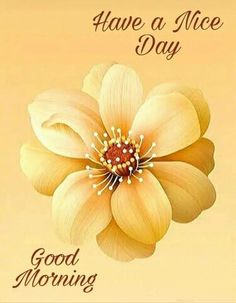 We bring such latest good morning images for you every day. Good Morning Monday Images, Latest Good Morning Images, Good Morning Beautiful Images, Beautiful Flowers Images, Good Morning Texts, Good Morning Picture, Good Morning Flowers, Morning Pictures, Good Morning Wishes