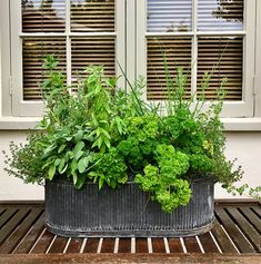 Herbs planted for great garden feature and so practical for cooking purposes