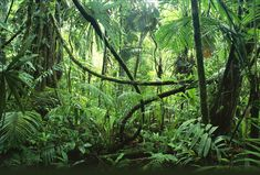 Belize Jungle Lodge: Luxury Jungle Lodge and Belize Vacation Packages from Mariposa Jungle Lodge