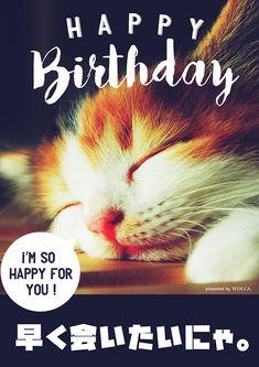 Birthday Messages, Birthday Images, Birthday Wishes, Girl Birthday, Happy Birthday Animals, Funny Animals, Cute Animals, I Am Happy, Presents