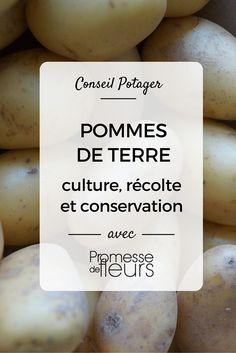 1000 images about potager pratique conseils diy on - Comment conserver des pommes de terre coupees ...