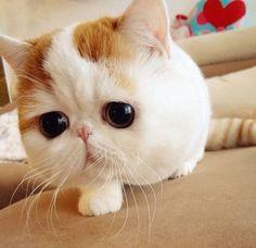snoopy the cat - Pesquisa Google