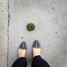 """A hole in the sidewalk! Let's do something beautiful with it"" said the funny little plant before filling it with perfect grace  #creativity #unespected #perfection #nature #city #green #concrete"