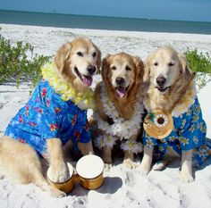 Fort Myers Beach Florida .. Beach Bum Pawty with Tyler, Brie and Bentley ~ AAAWWW~