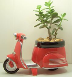 Succulent Jade planter Red Scooter diy kit- for my scooter riding friends? Jade Succulent, Succulent Planters, Fathers Day Sale, Get Well Gifts, Diy Desk, Desk Accessories, Dorm Decorations, Diy Kits, Planting Succulents