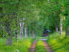 Finnish alley