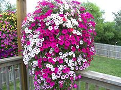 How To Make A Hanging Flower Basket