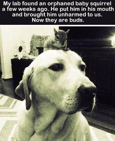Such a nice dog