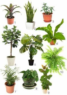 zimmergrünpflanzen bestimmen pflanzenarten ideen