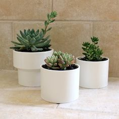 Take a trip to the hardware store and make planters out of PVC to pot up your succulents! Diy Projects Using Pvc Pipe, Pvc Projects, Plant Projects, Succulent Pots, Planter Pots, Succulents Diy, Pvc Chicken Waterer, Modern Planters, Flower Pots