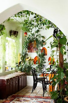 Indoor garden i love it.       This is how I would Like my house to be...love it