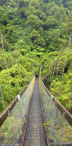 10 places in New Zeland. Motu Falls big swinging suspension bridge and dripping rainforest - Gisborne, North Island, New Zealand Places Around The World, Oh The Places You'll Go, Cool Places To Visit, Places To Travel, New Zealand Adventure, New Zealand Travel, Adventure Is Out There, Wonders Of The World, Adventure Travel