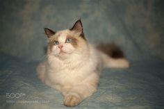 Cat by 258777299 via http://ift.tt/2kfrxzZ