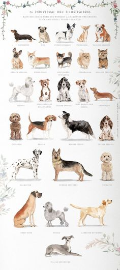 ad: Muddy Paws- Dog Lover Graphics by Twigs and Twine on Tattoo L, Different Dogs, Dog Logo, Dog Illustration, Floral Illustrations, Freelance Illustrator, Dog Paws, Westies, Australian Shepherd