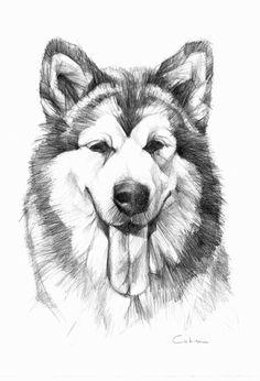 Alaskan Malamute Pet Portrait Original Pencil by PETARTPortraits, $25.00