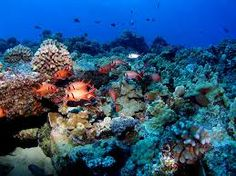 under the ocean - Google Search