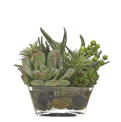 Preorder for January | Succulent (GS107C): Preorder for January | Succulent, Green, Glass Square, 9wx10dx7h