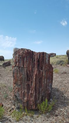 While the Grand Canyon proves tough competition I would like to put forward a strong contender for most breathtaking part of Arizona: the Petrified Forest National Park. As you can see in the photo…