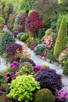 Миксбордер свободной формы из декоративно-лиственных, хвойных и травянистых многолетников устроен вдоль извилистой дорожки