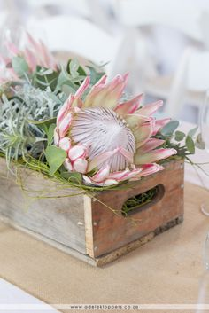 Protea Art, Protea Flower, Protea Centerpiece, Floral Centerpieces, Flower Art, Pink Flowers, Beautiful Flowers, Modern Flower Arrangements, Gardens