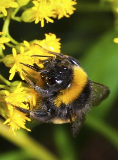 Bees' Needs Champions Awards celebrate pollinator heroes from the south west