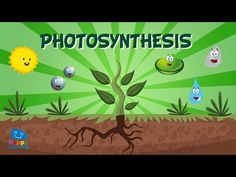 Neste vídeo móstrasenos como se alimentan as plantas a través do proceso de fotosíntese. 5th Grade Science, Middle School Science, Science Projects For Kids, Science For Kids, Plant Science, Earth Science, Education Humor, Kids Education, Science Education