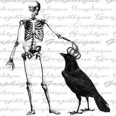 skeleton & raven