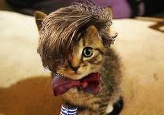 Matt smith as a cat!