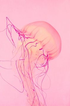 Pink Jellyfish No 3 5 X 7 Photography Print Nature by lladybuggz #LostOcean Colour palette inspiration!