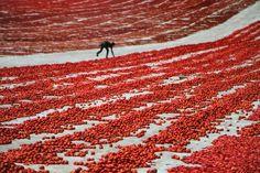 Red Reel olimpic game
