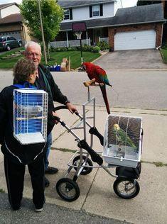 Hover Cat, Diy Bird Toys, Pet Bird Cage, Parrot Toys, Parrot Bird, Budgie Toys, Parrot Pet, Budgies, Parrots