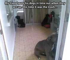Funny dog punishment: My friend puts his dogs in time out when they act up, this time it was the trash.