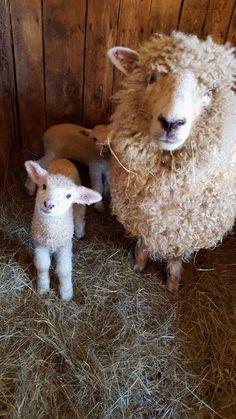#sheep farm minecraft,#sheep farm diy,sheep farm livestock #cars #motorcycles #celebrities #DIY #crafts