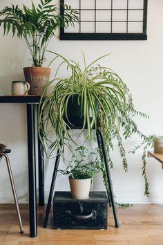 Living room plant display.