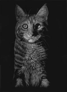 """Tabby at Twilight"" Original 12 by Scratchboard Art, Zimmerman, Pet Portraits, Twilight, Wildlife, Kitty, Black And White, Pets, Artist"