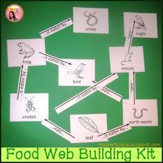 Food webs and food chains can be easily created using the six steps that are detailed in this package. It also has everything you need to make your own food  chains and food webs. Here's a list of what's inside:A 10 page illustrated step by step tutorialFood chain-making worksheets with answer keysBuild-a-food-web bulletin board or activity sets for making a... *safari food web*, *forest food web*, *garden food web*, *wetland food web*, *ocean food web*, and *Arctic food web*.Arrows and…