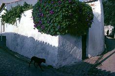 © Bruno Barbey/Magnum Photos PORTUGAL. Algarve region, village of Figueira near Sagres. 1979.