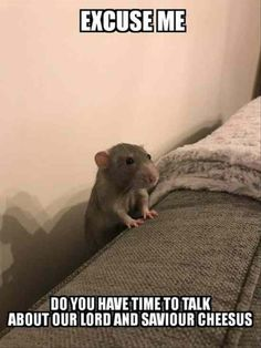 Rat, Gerbil, Hamster, 9GAG Meme: EXCUSEME DO YOU HAVE TIMETO TALK ABOUT OUR LORD AND SAVIOUR CHEESUS