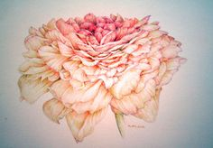 Ranunculus Blossom'  by Peggy McGahan  Colored pencil original drawing on archival paper. Price includes archival quality mat, UV protected glass and frame. Size including mat is 14x15 inches.