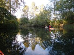Paddling up the Cowichan River - from the Images of Victoria Collection