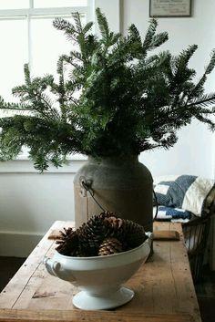 Spruce branches and pine cones. QUE BUENO ES VIVIR!!