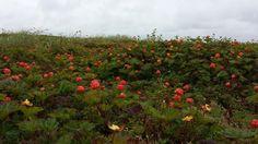 On the tundra. Every shade of orange!